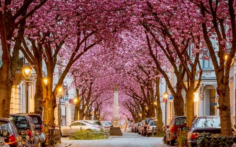 بُن، آلمان
