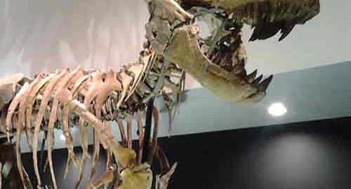 فسیل دایناسور در جهان