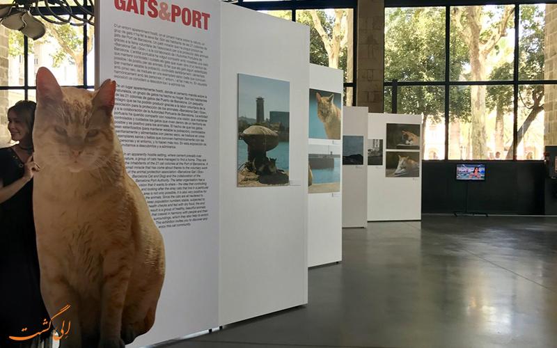 موزه گربه ایتو