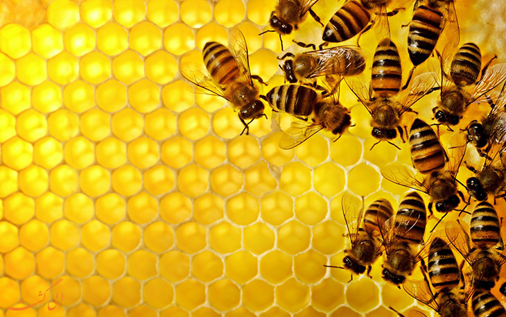 زنبور در هواپیما