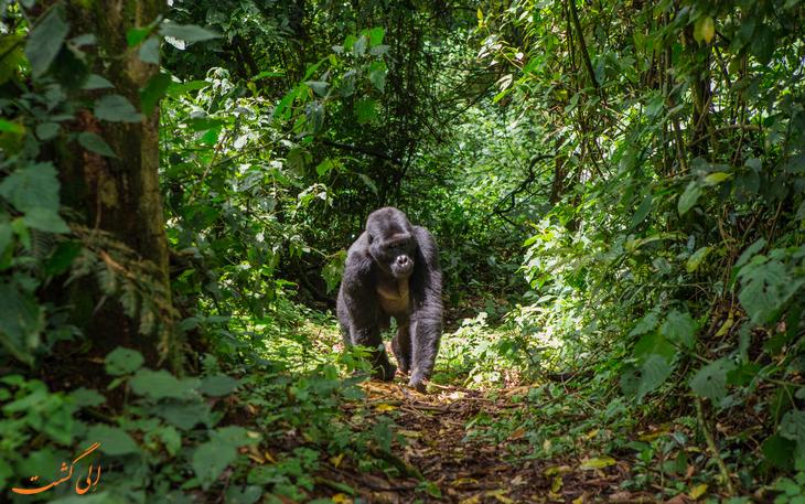 جنگل های کنگو