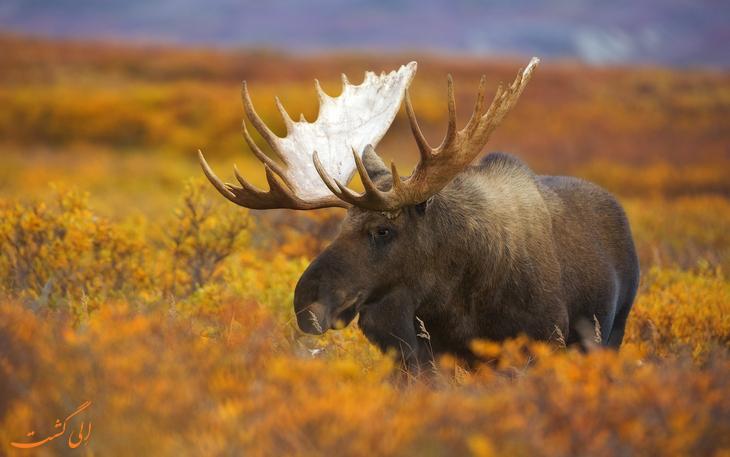 پارک ملی زیبای دنالی