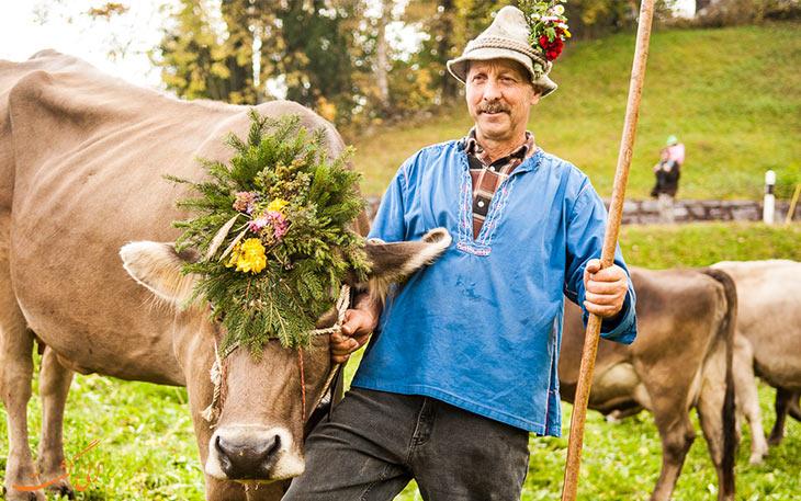 فستیوال ملکه گاوها در سوئیس