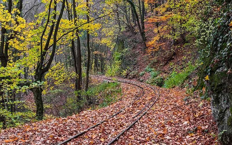 راه آهن جنگلی