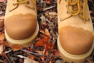 کفش کوهنوردی - الی گشت