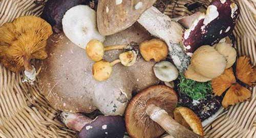 انواع قارچ