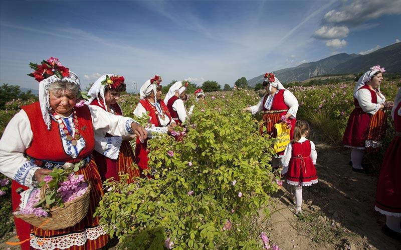 نکات سفر به بلغارستان_ گل های رز