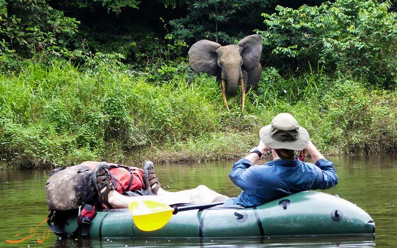 گردشگری-حیات-وحش- فیل های گابون