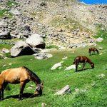 دشت میشان بهشت کوهنوردان در همدان