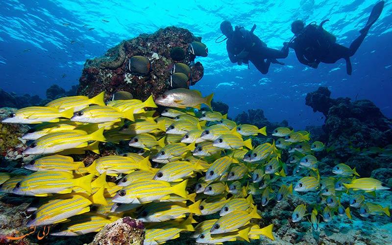 صخره موز   Banana Reef