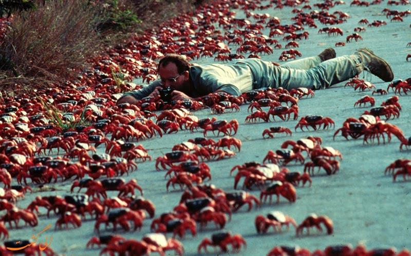 مهاجرت خرچنگ های جزیره کریسمس