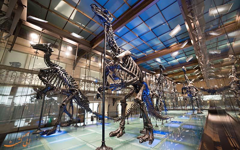 موزه علوم طبیعی بروکسل