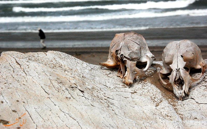 ساحل اسکلت