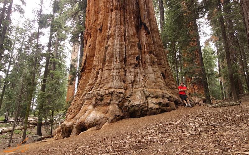 درخت غول پیکر 3200