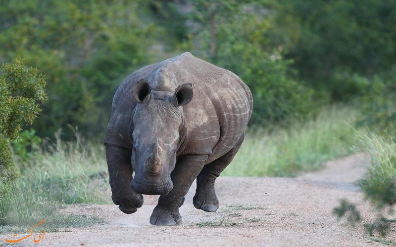 خطرناک ترین حیوانات دنیا