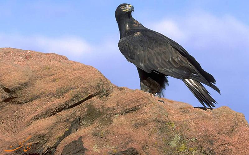 پرندگان منطقه حفاظت شده هفتاد قله