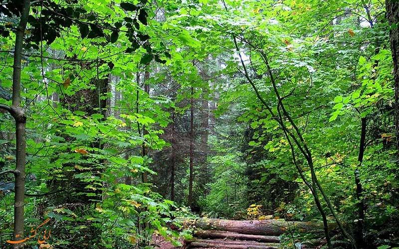 جنگل جهان نما