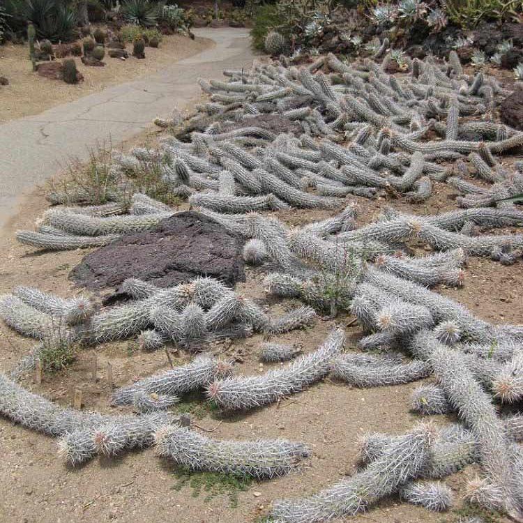 گیاهان عجیبی که راه می روند!