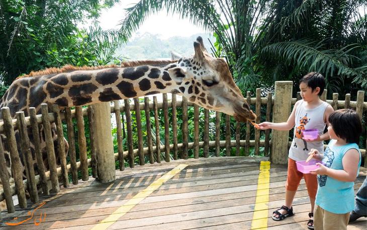 باغ وحش جذاب سنگاپور