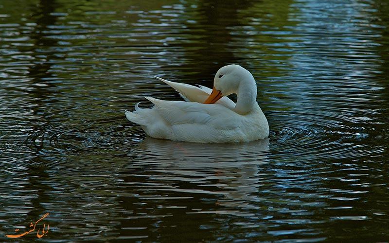 پرندگان پارک وندل