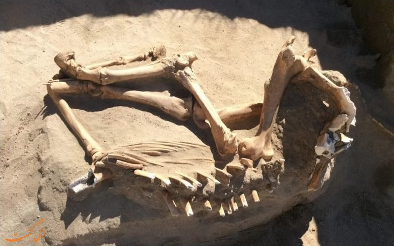 استخوان یافت شده