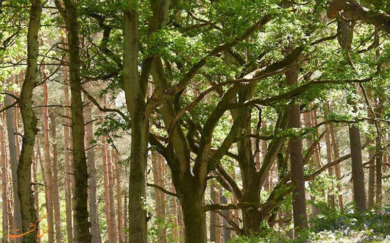 عجیب ترین جنگل ها