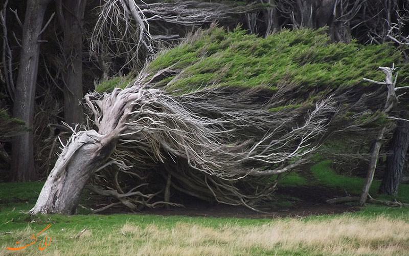درختان عجیب