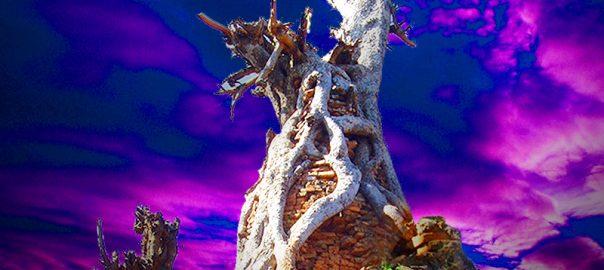 جنگل مقبره های سورئال