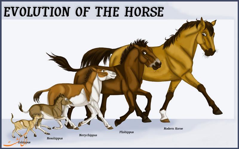 تکامل اسب های در طول زمان