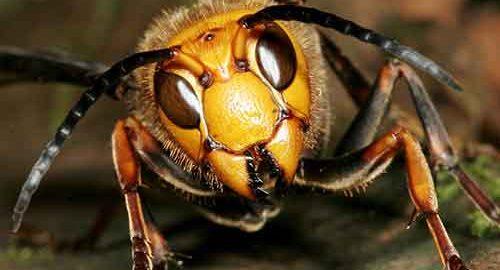 خطرناک ترین حشرات جهان