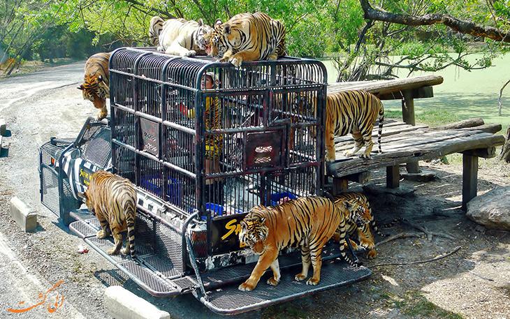 دنیای وحش سافاری بانکوک