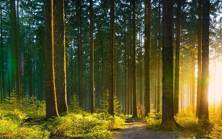 جنگل شروود در انگلستان