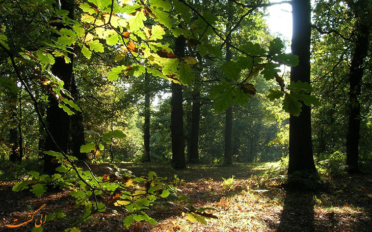 جنگل های شروود