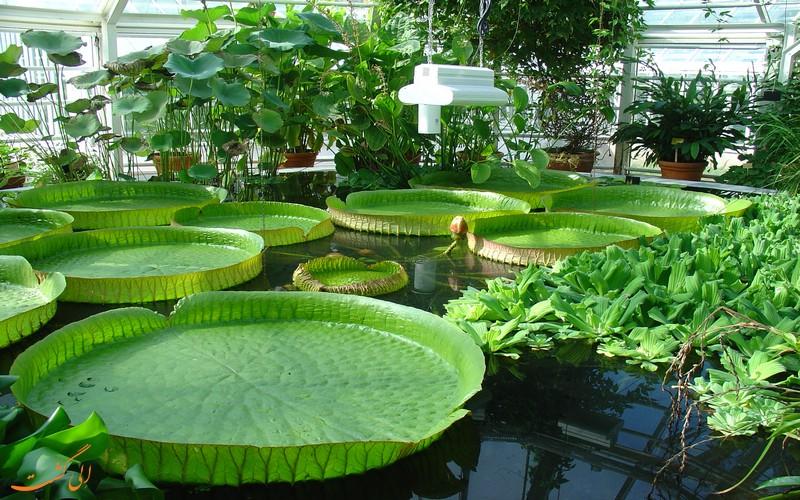 دانشگاه گیاهشناسی وارنا