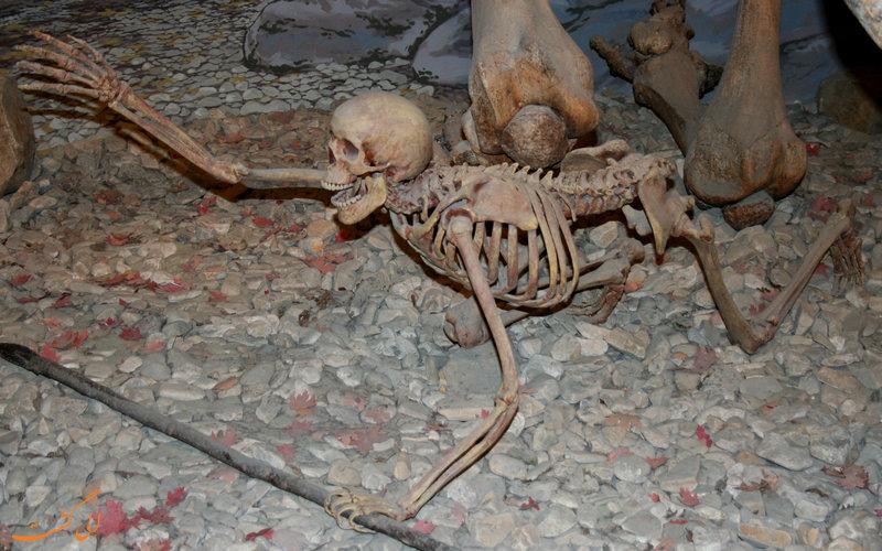 موزه حیات باستانی یوتا