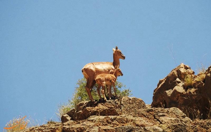 حیوانات منطقه حفاظت شده هفتاد قله
