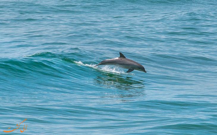 ماجرای دزدین دلفین در چین