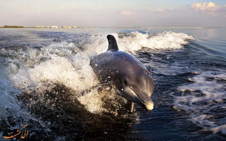 دزدیدن دلفینی در چین