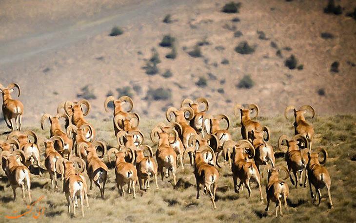 پوشش حیوانی پارک ملی خبر
