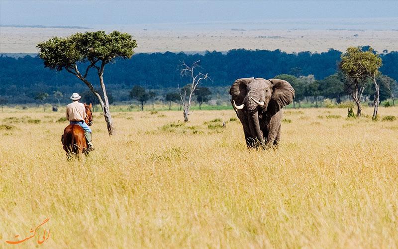 سفر به قاره آفریقا- جاذبه های آفریقا