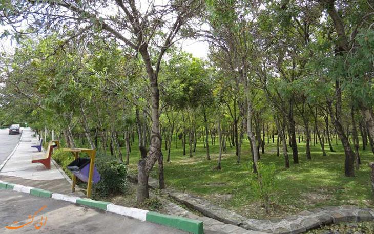 پارک-جنگلی-شیخ-تپه