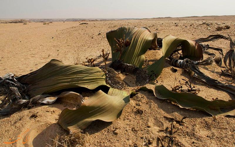گیاهان زشت دنیا