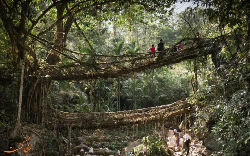 پل های درختی