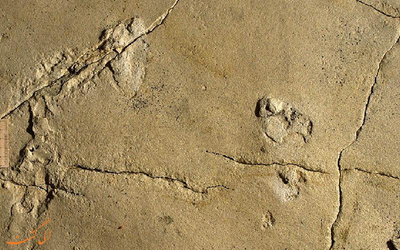 قدیمی ترین جای پای جهان کشف شد!