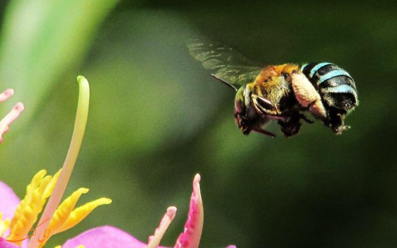 زنبورها زنبورها جذب چه گل هایی می شوند