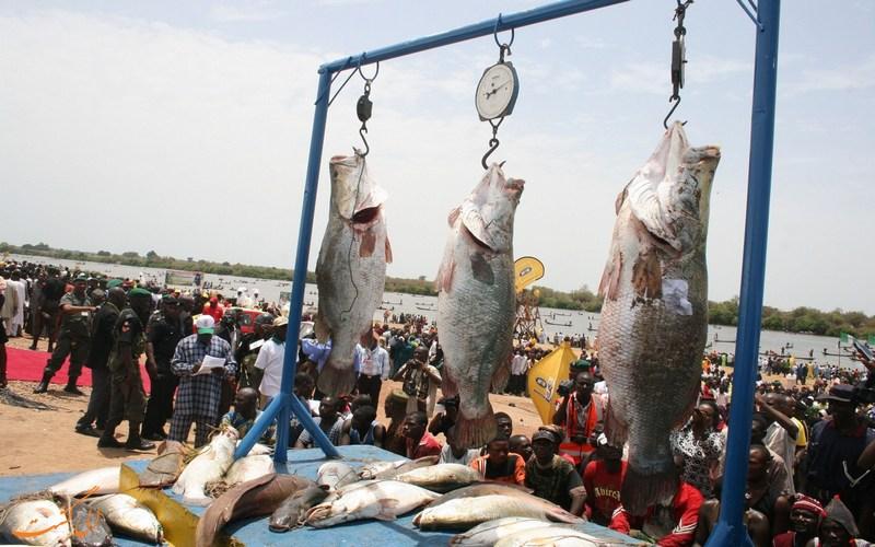 ماهی های صید شده