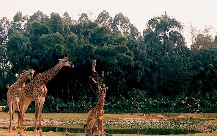 پارک سافاری در گوانجو