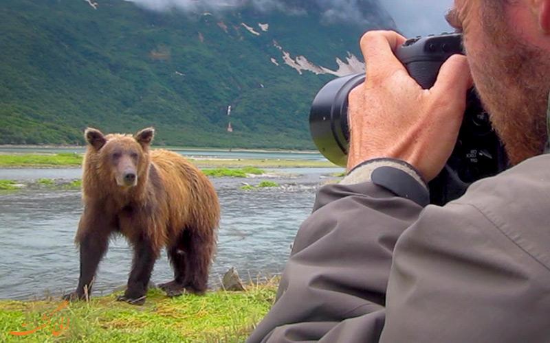 عکس انداختن از خرس در سافاری در آلاسکا