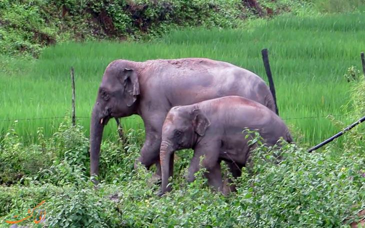 باغ وحش فیل های آبی