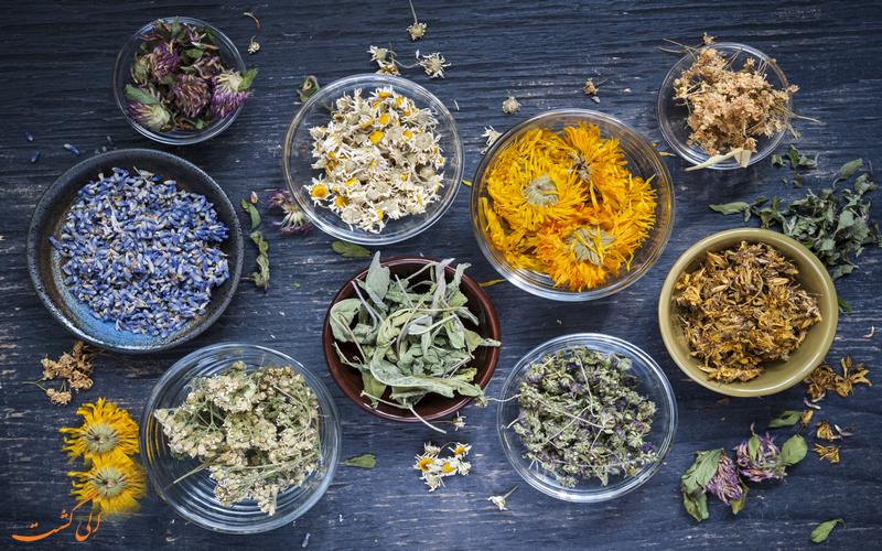 جشنواره گیاهان دارویی